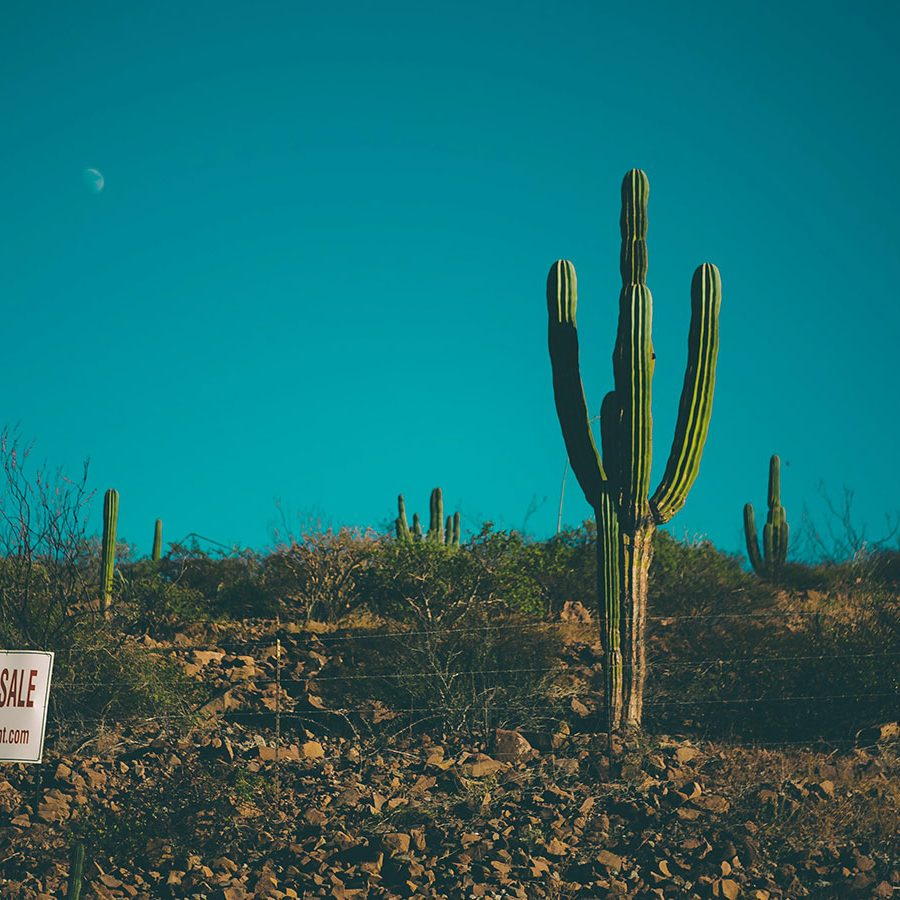 green-cactus-2622764.jpg